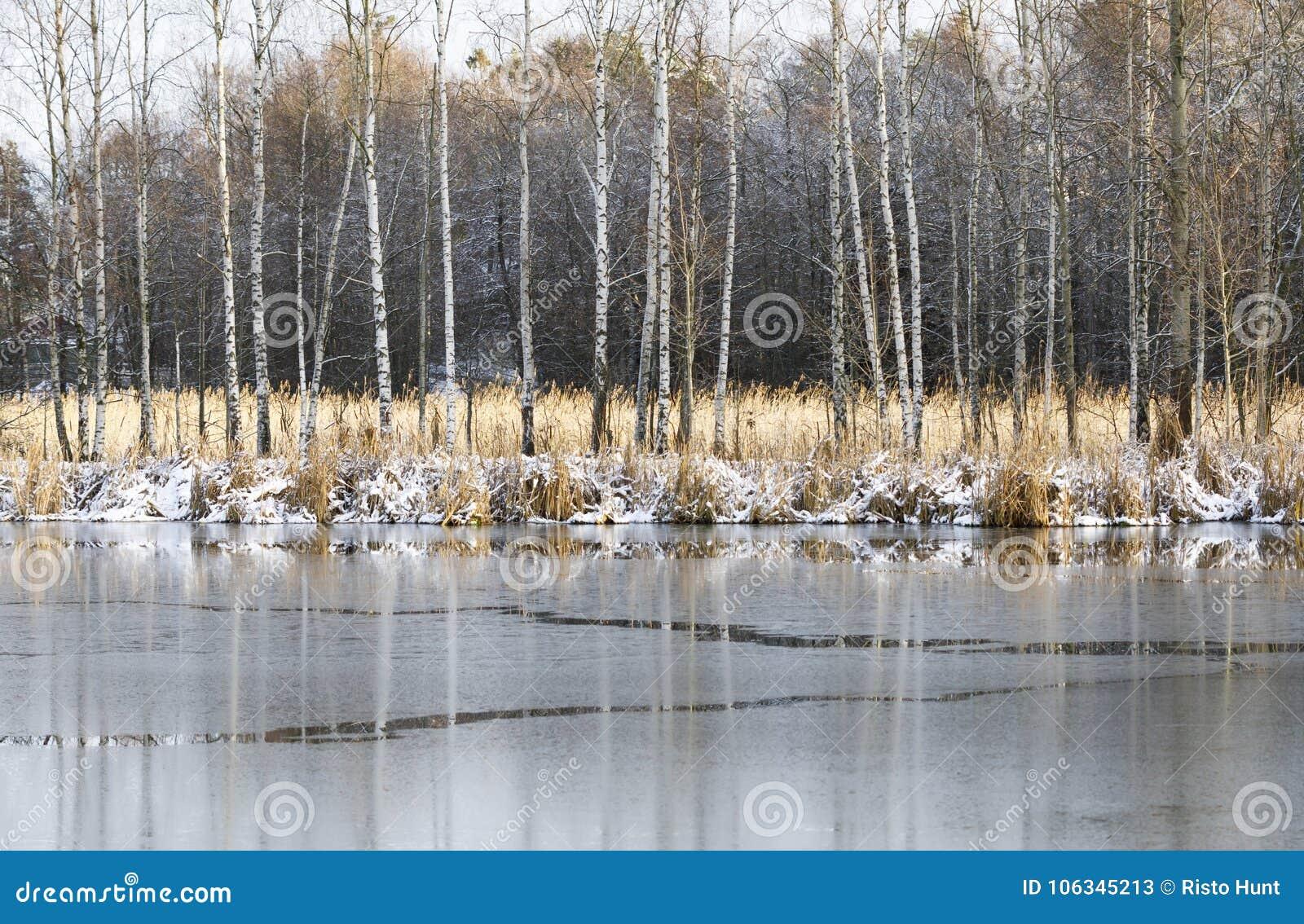 Ландшафт зимы с замороженными деревьями воды и березы