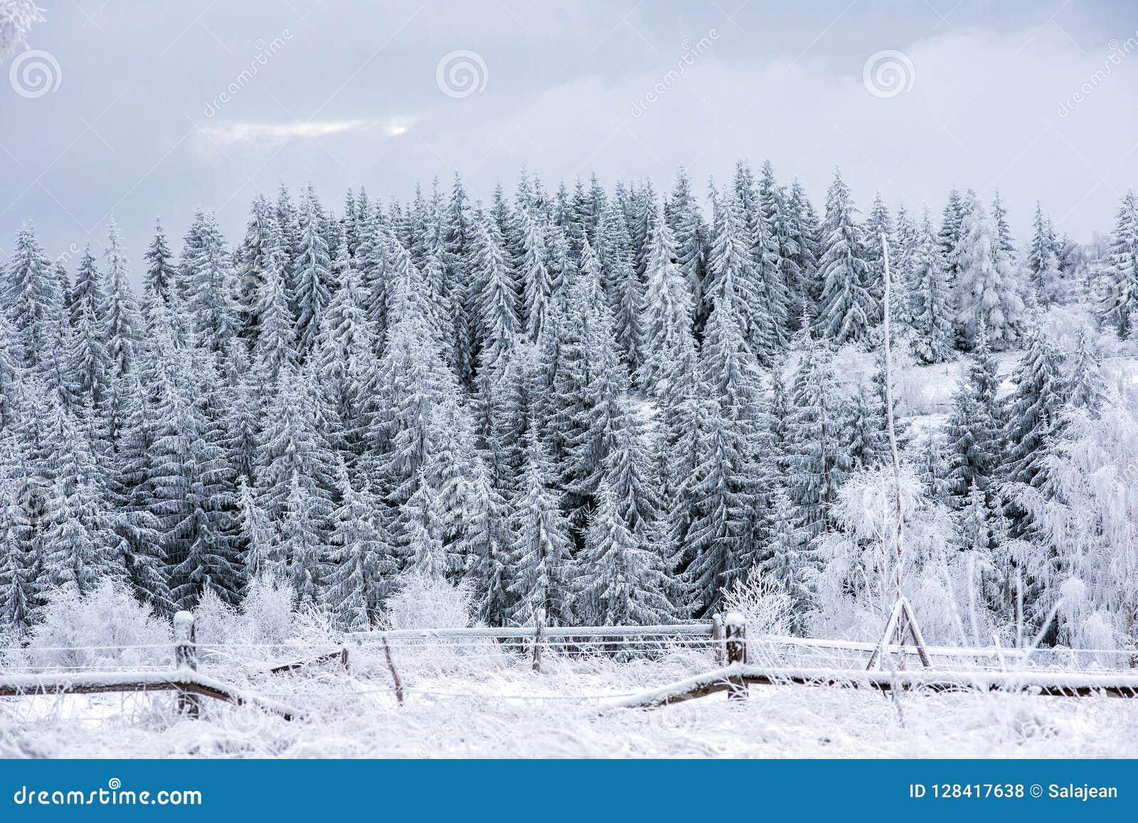 Ландшафт зимы с снегом на деревьях