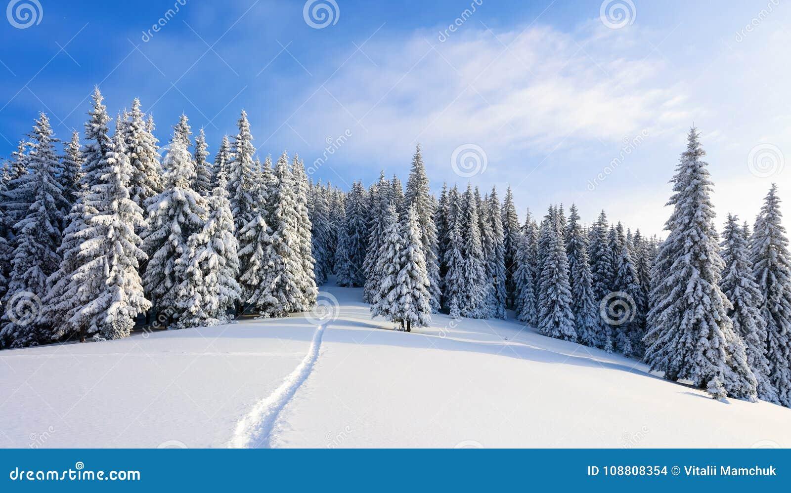Ландшафт зимы с справедливыми деревьями под снегом Пейзаж для туристов Праздники рождества