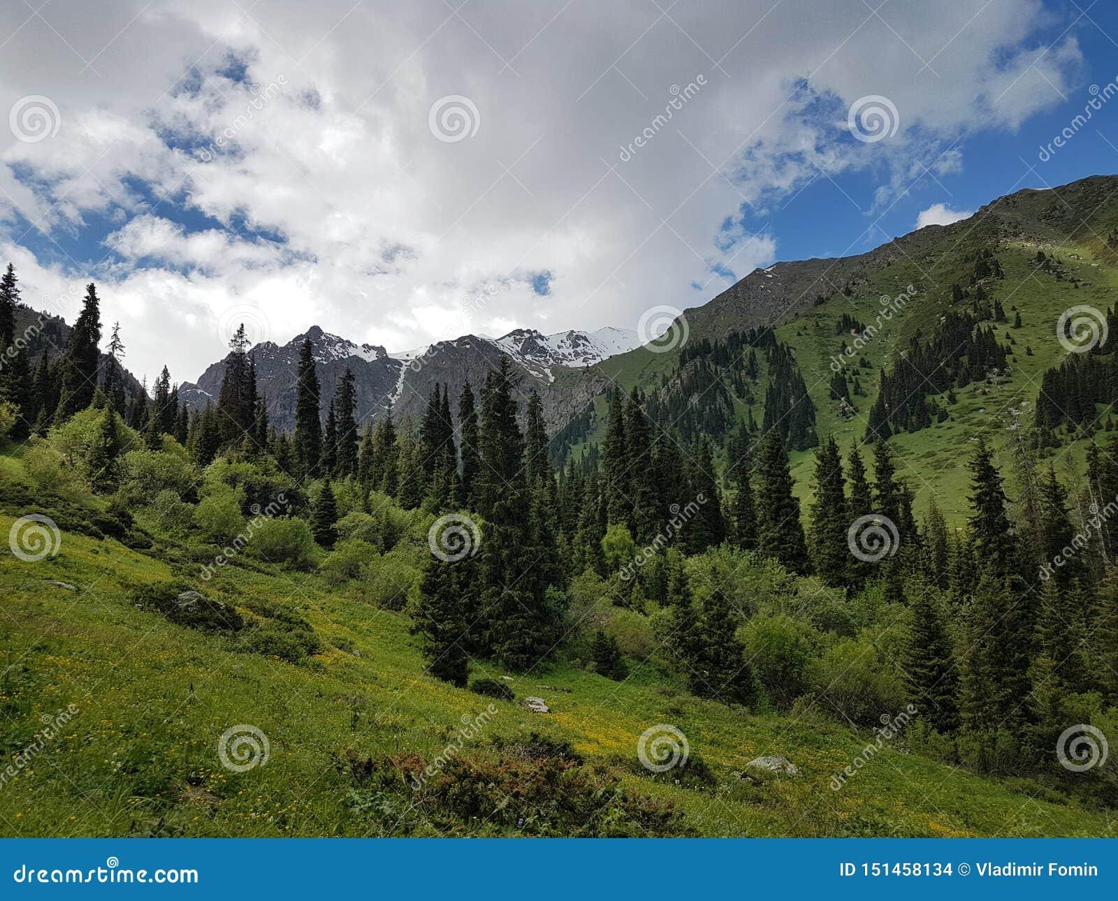 Ландшафт лета в горах