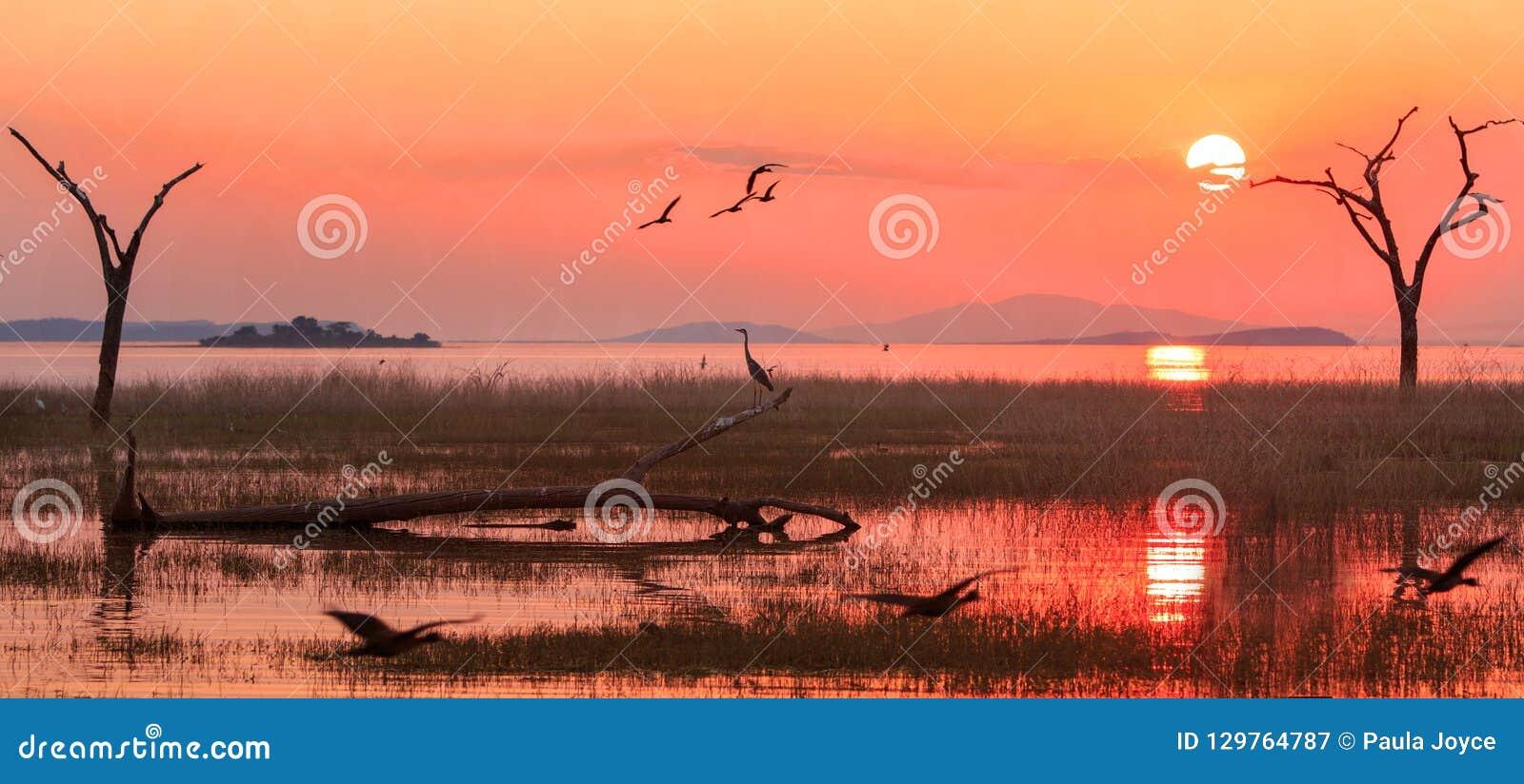 Ландшафт озера Kariba с ярким оранжевым небом захода солнца с египетскими гусынями и силуэта цапли, Зимбабве