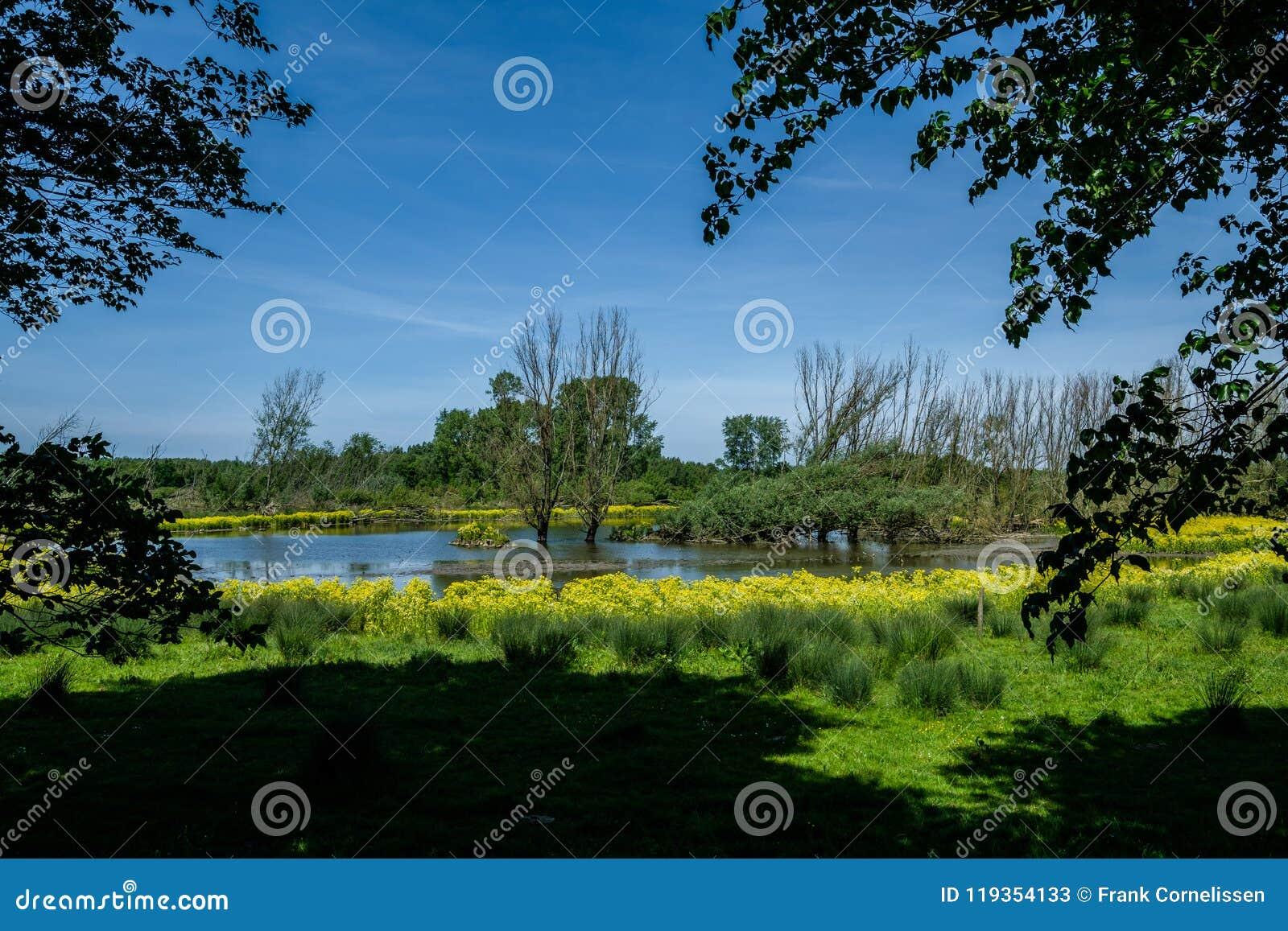 Ландшафт польдера, рекреационная зона около Роттердама