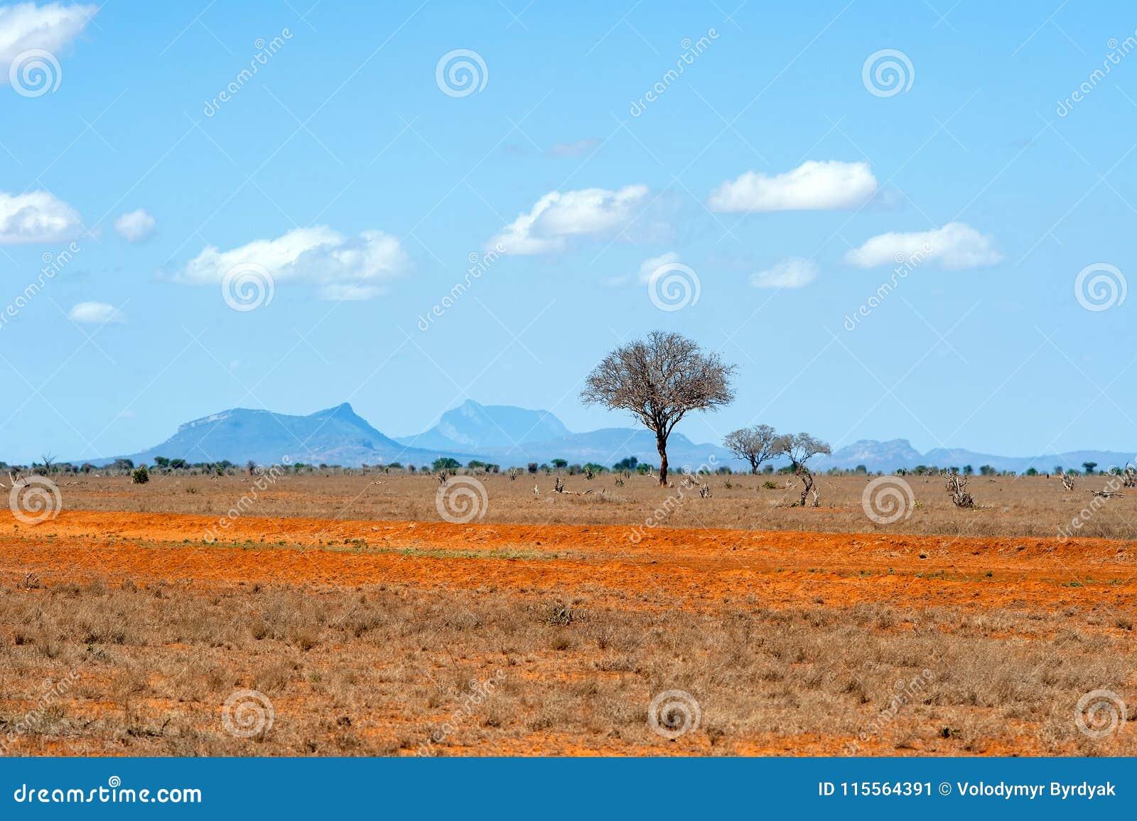 Ландшафт с никто дерево в Африке