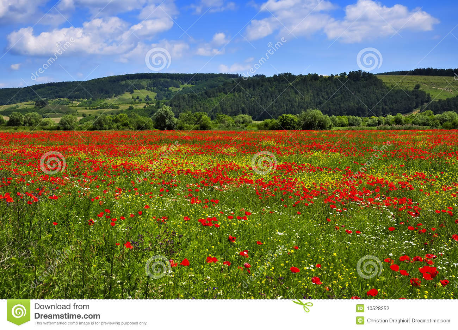 Ландшафт с полем маков