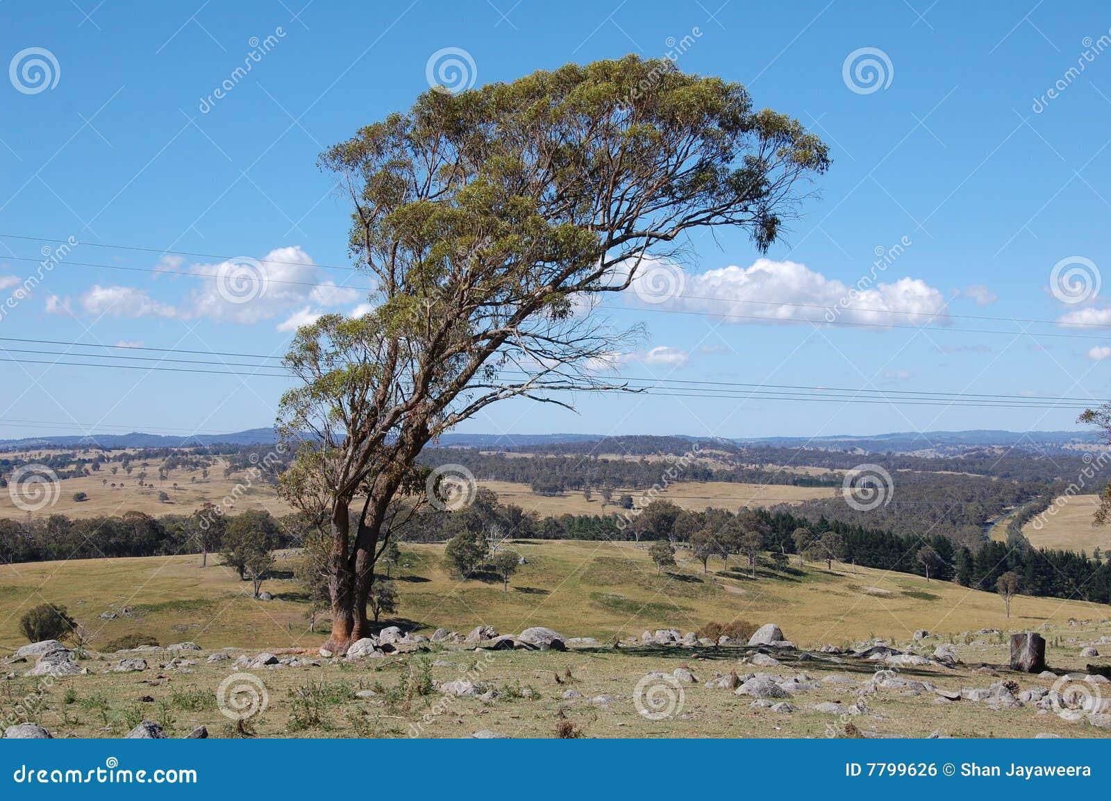ландшафт bush armidale