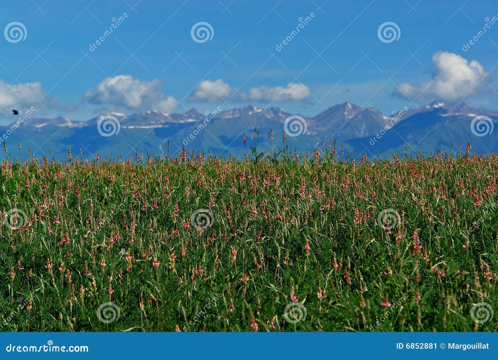 ландшафт kyrgyzstan сценарный
