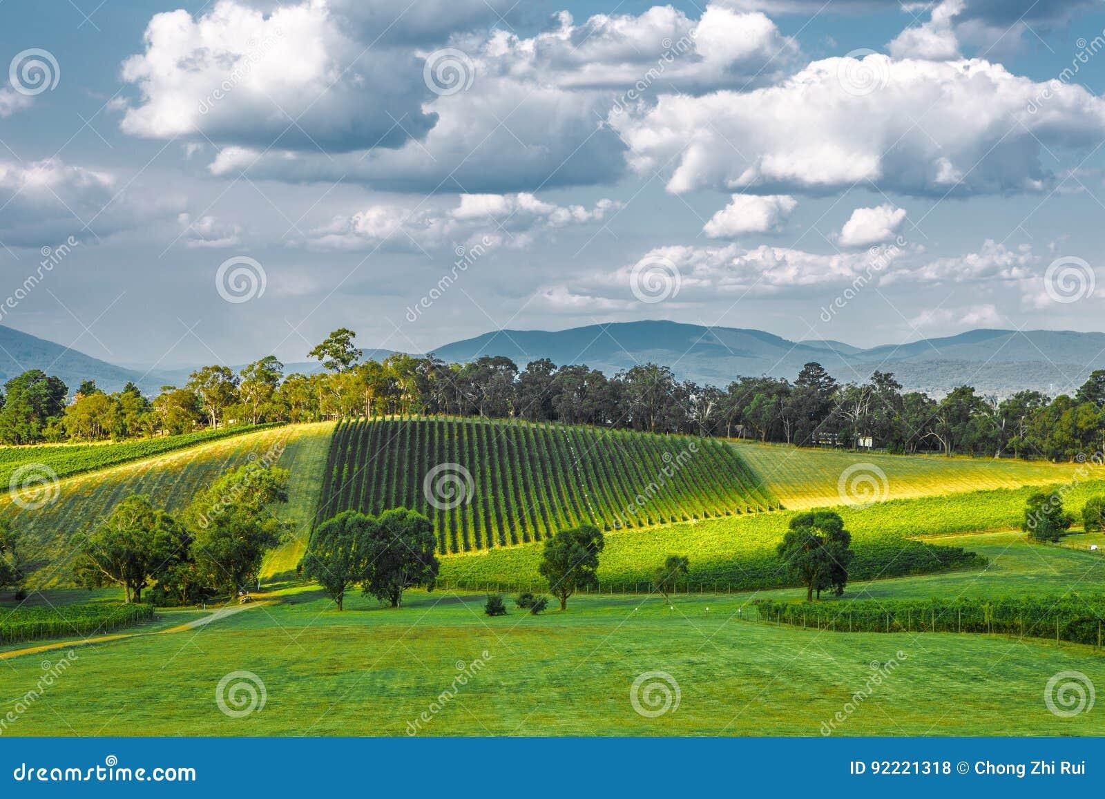 Ландшафт винодельни