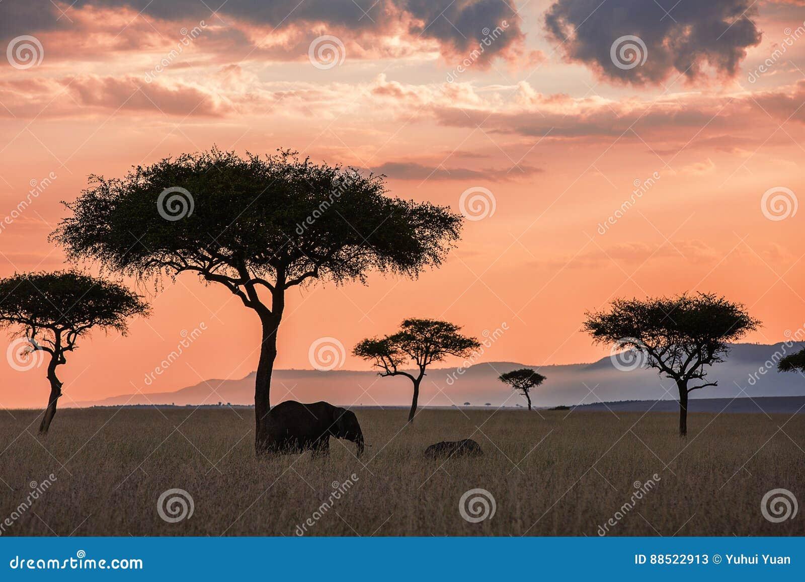 Ландшафт захода солнца Maasai Mara