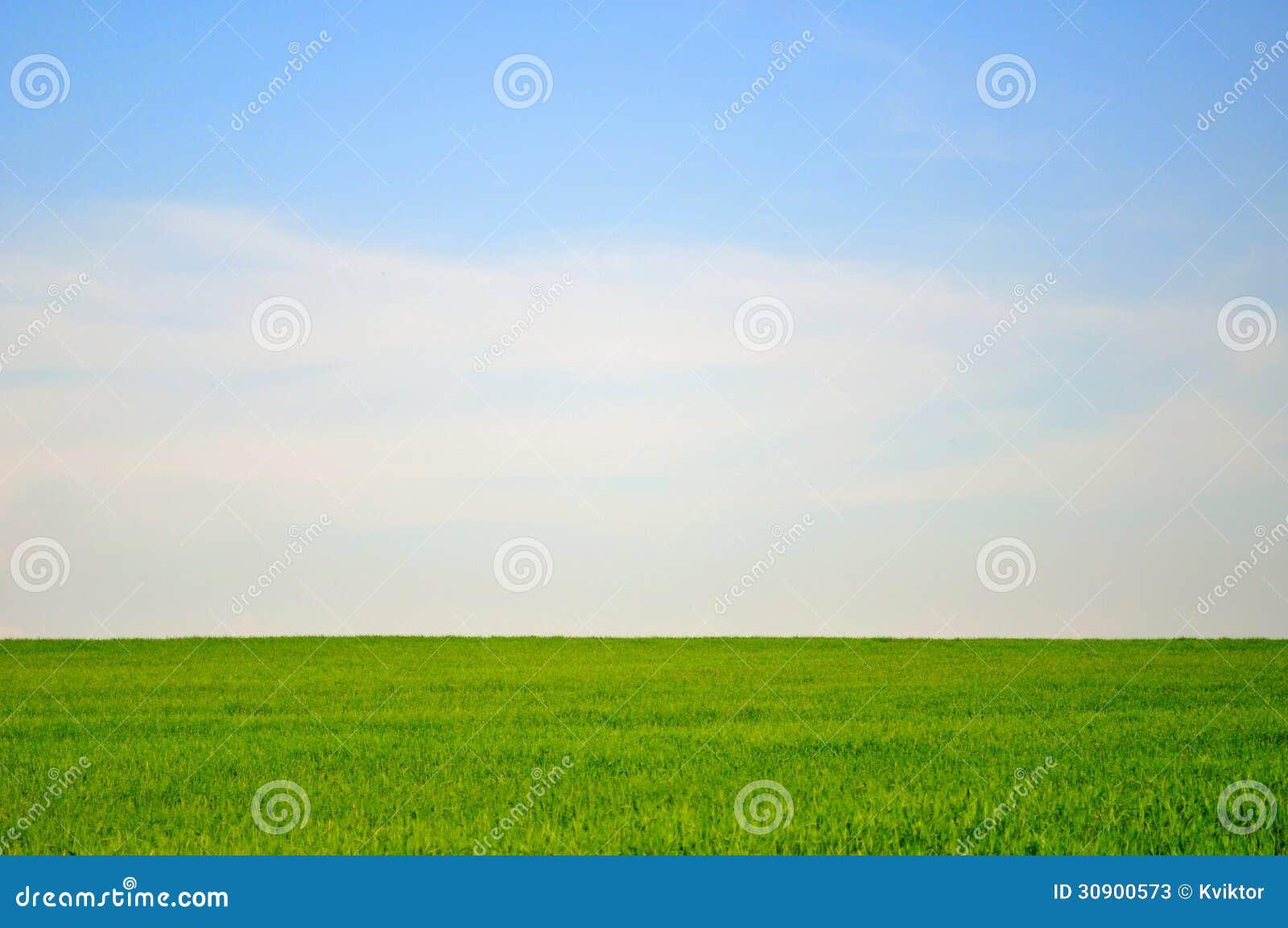 Ландшафт зеленого поля и голубого неба