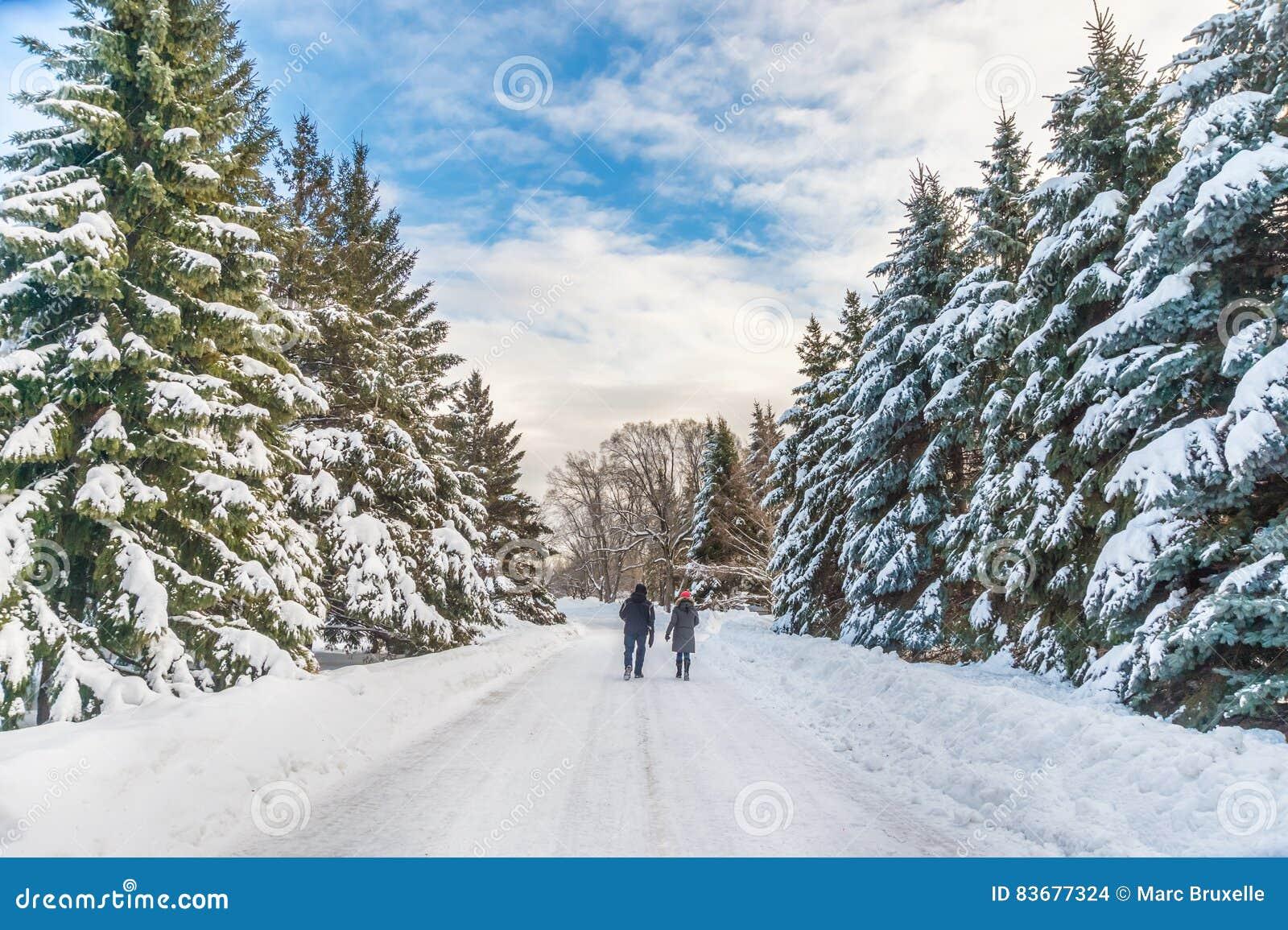 Ландшафт зимы снежный в Монреале