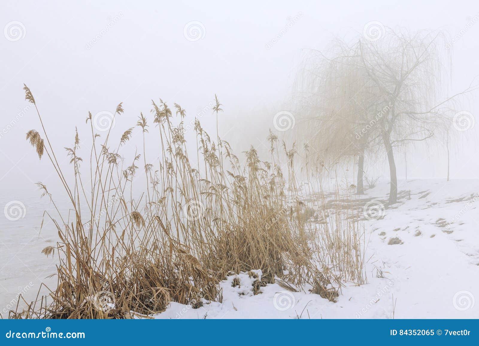 Ландшафт зимы с берегом Snowy тумана озера в тумане