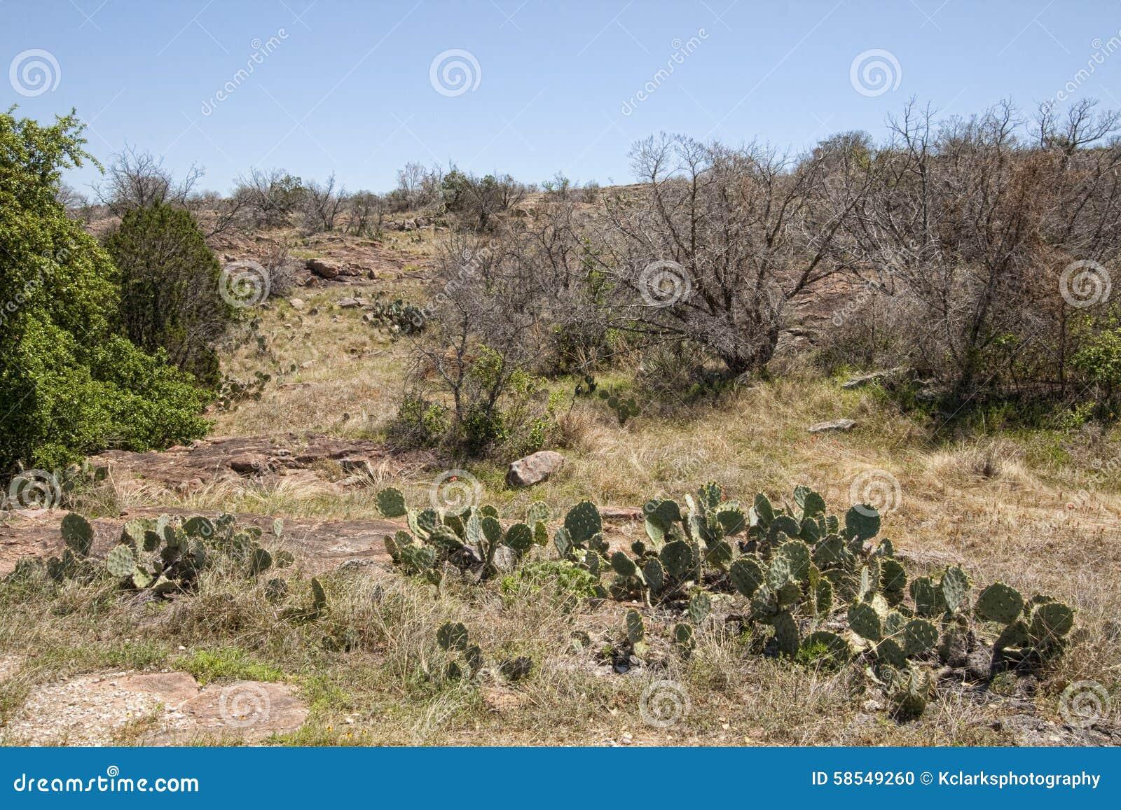 Картинки природы техаса