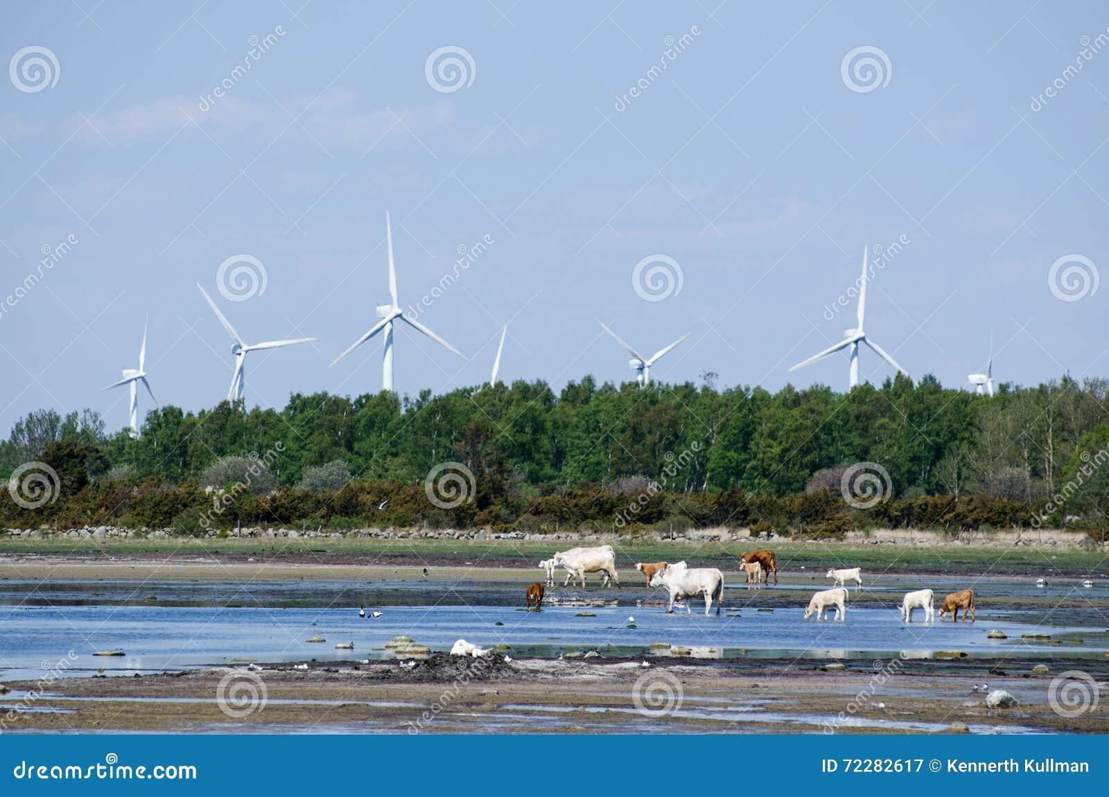 Download Ландшафт с возобновимыми ресурсами Стоковое Изображение - изображение насчитывающей renewable, coast: 72282617