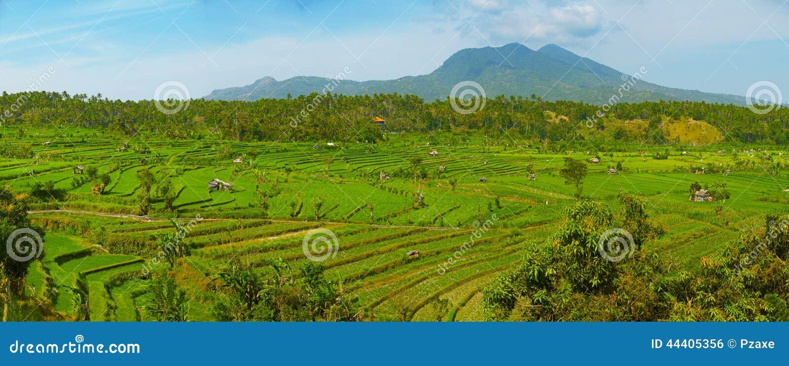 Ландшафт с полями риса и вулканом Agung bali Индонесия