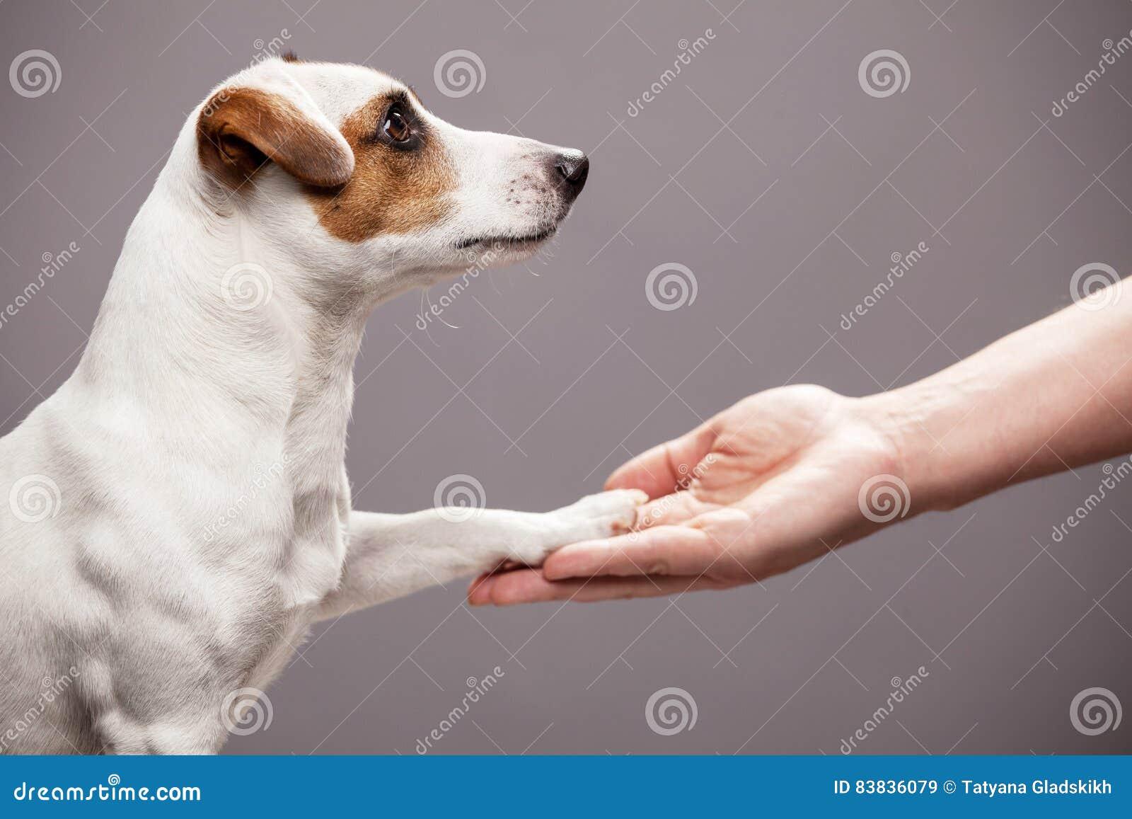 Лапка собаки принимает человека