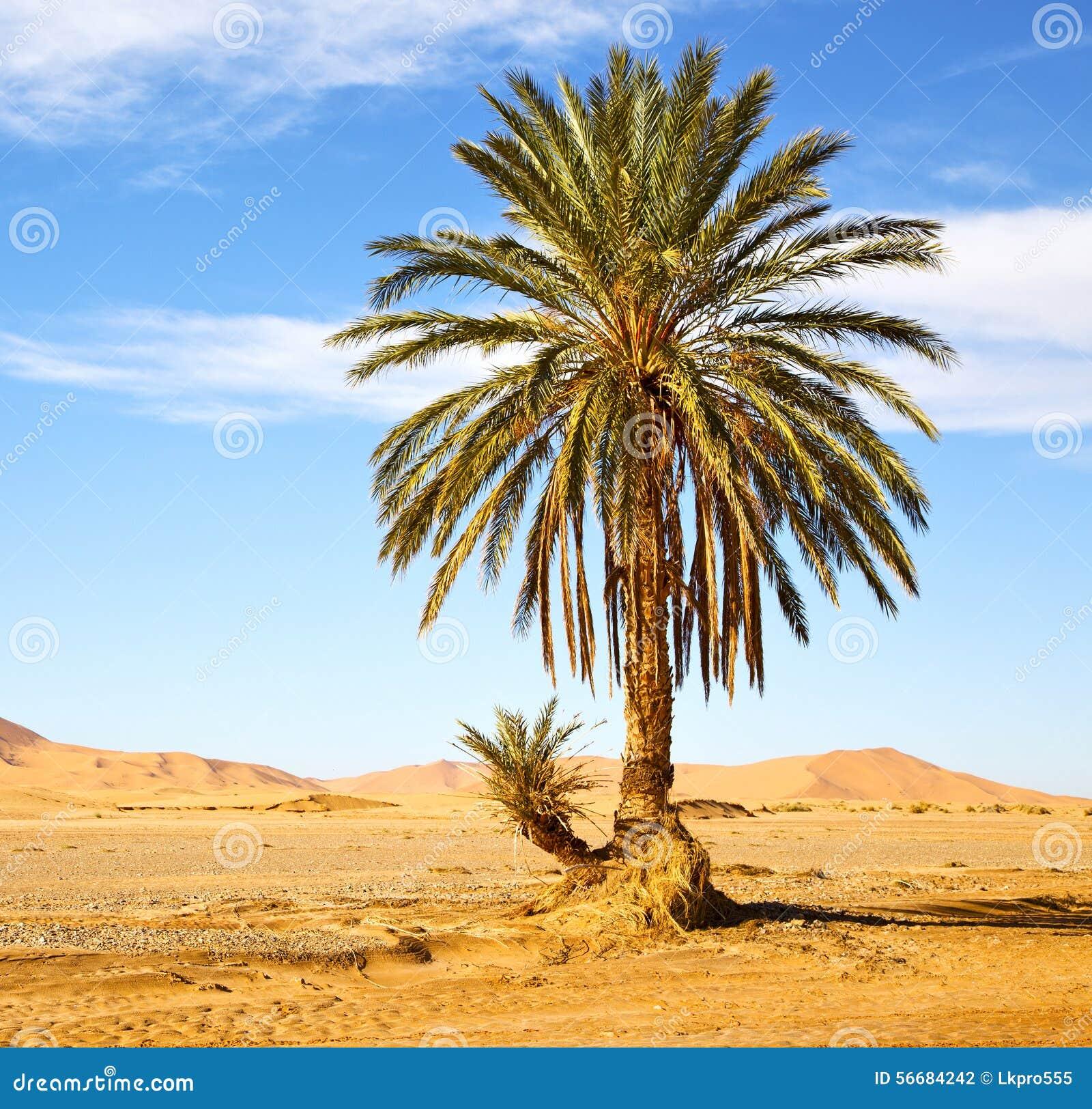 Ладонь в пустыне