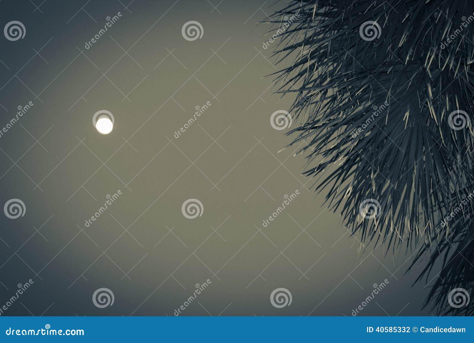 Ладонь луны