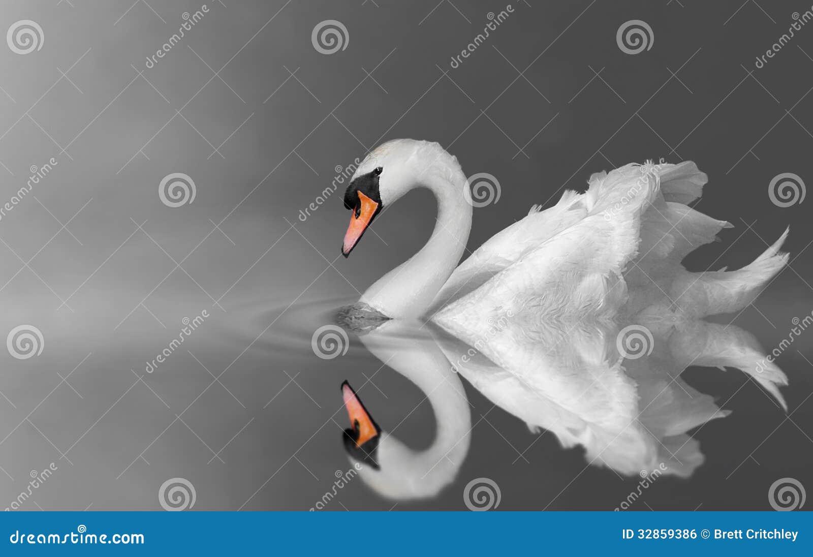 Лебедь спокойствия
