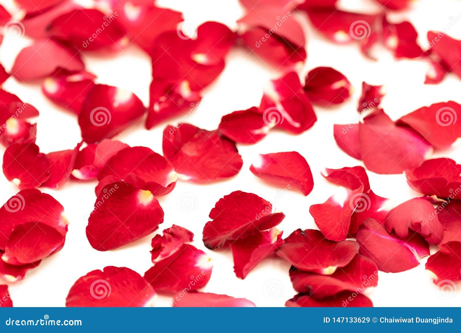 Лепестки розы аранжировали в картине