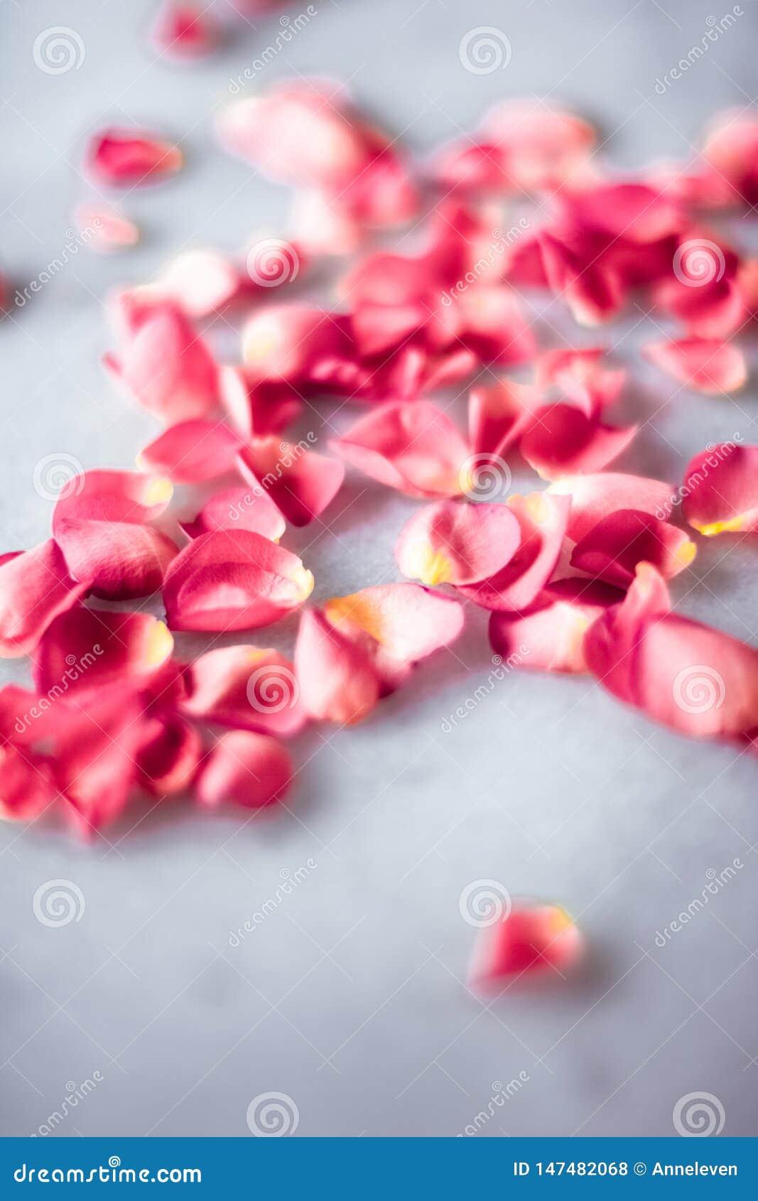 Лепестки розы на мраморном камне, флористической предпосылке