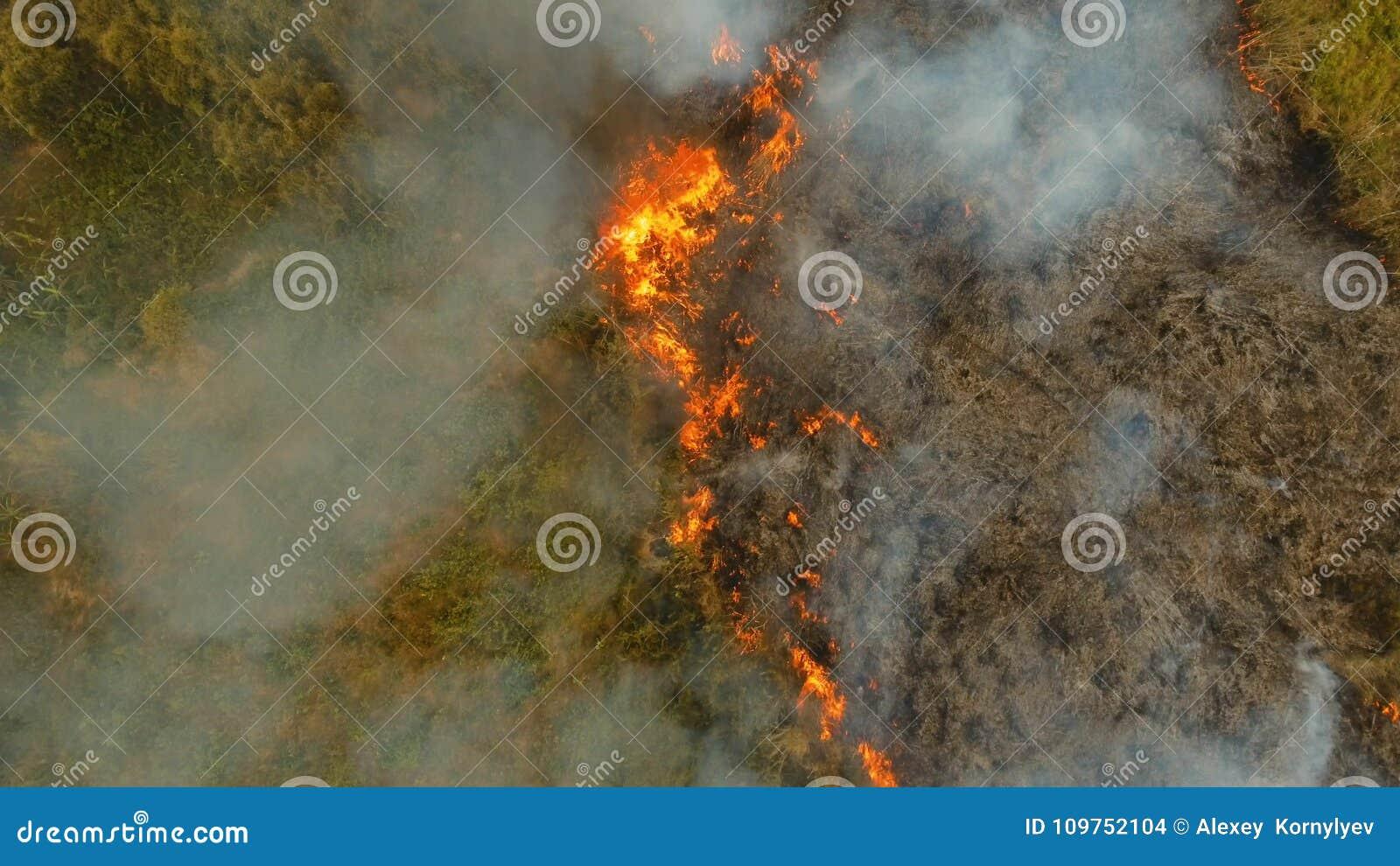 Лесной пожар вида с воздуха Busuanga, Palawan, Филиппины