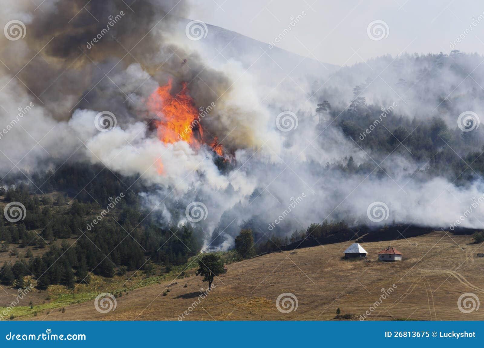 Лесной пожар на горе