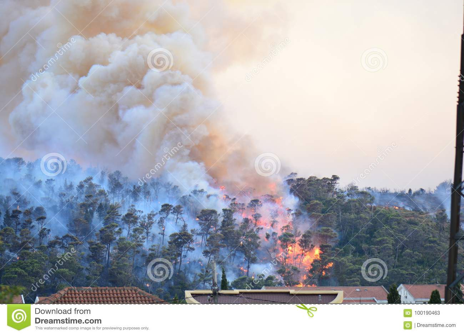 Лесной пожар Сгорели деревья после лесного пожара, загрязнения и много дыма
