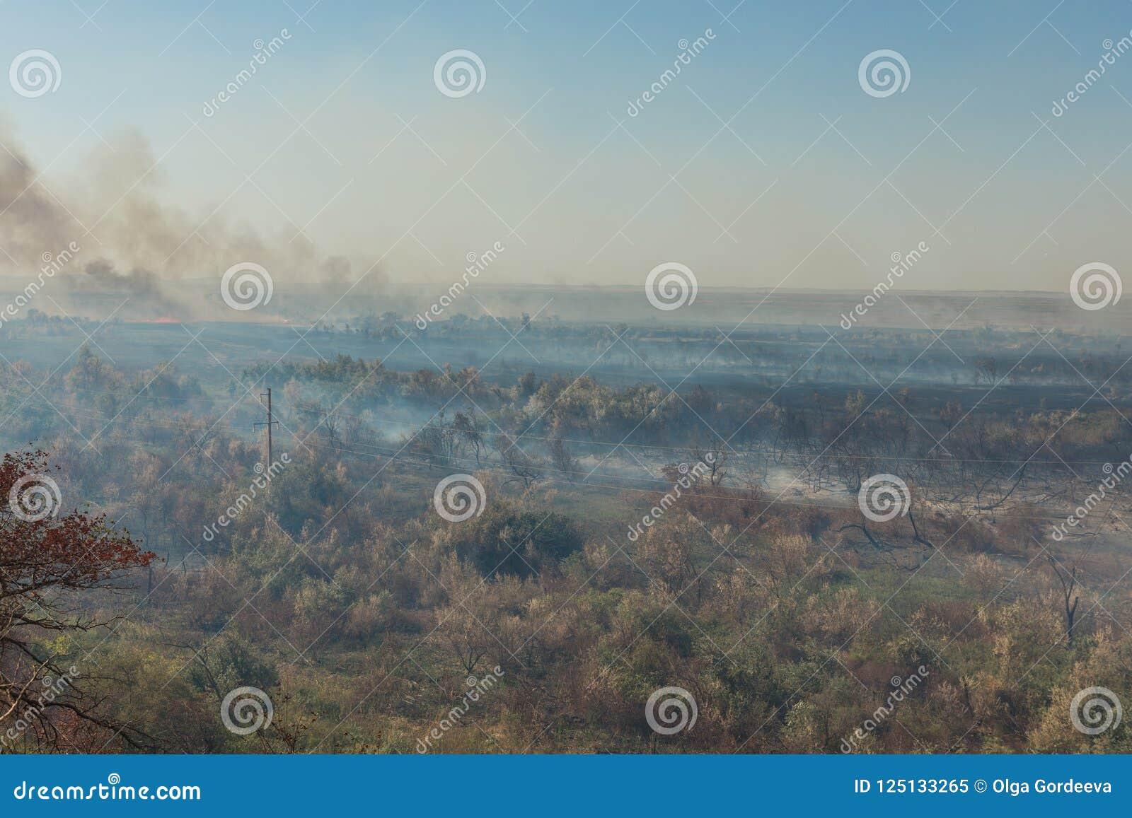 Лесной пожар Сгорели деревья после лесного пожара, загрязнения