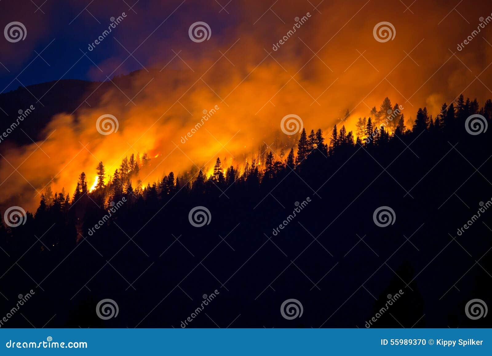 Лесной пожар с синим небом позади