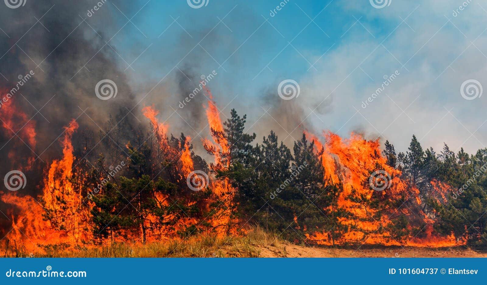 Лесной пожар упаденное дерево горится к земле много дым когда лесной пожар