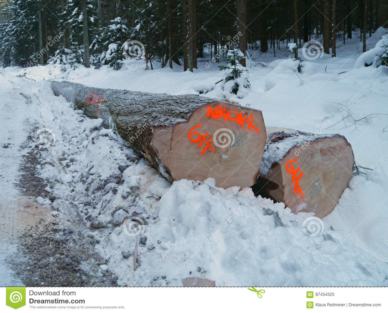 Лесохозяйство в зиме с снежной древесиной