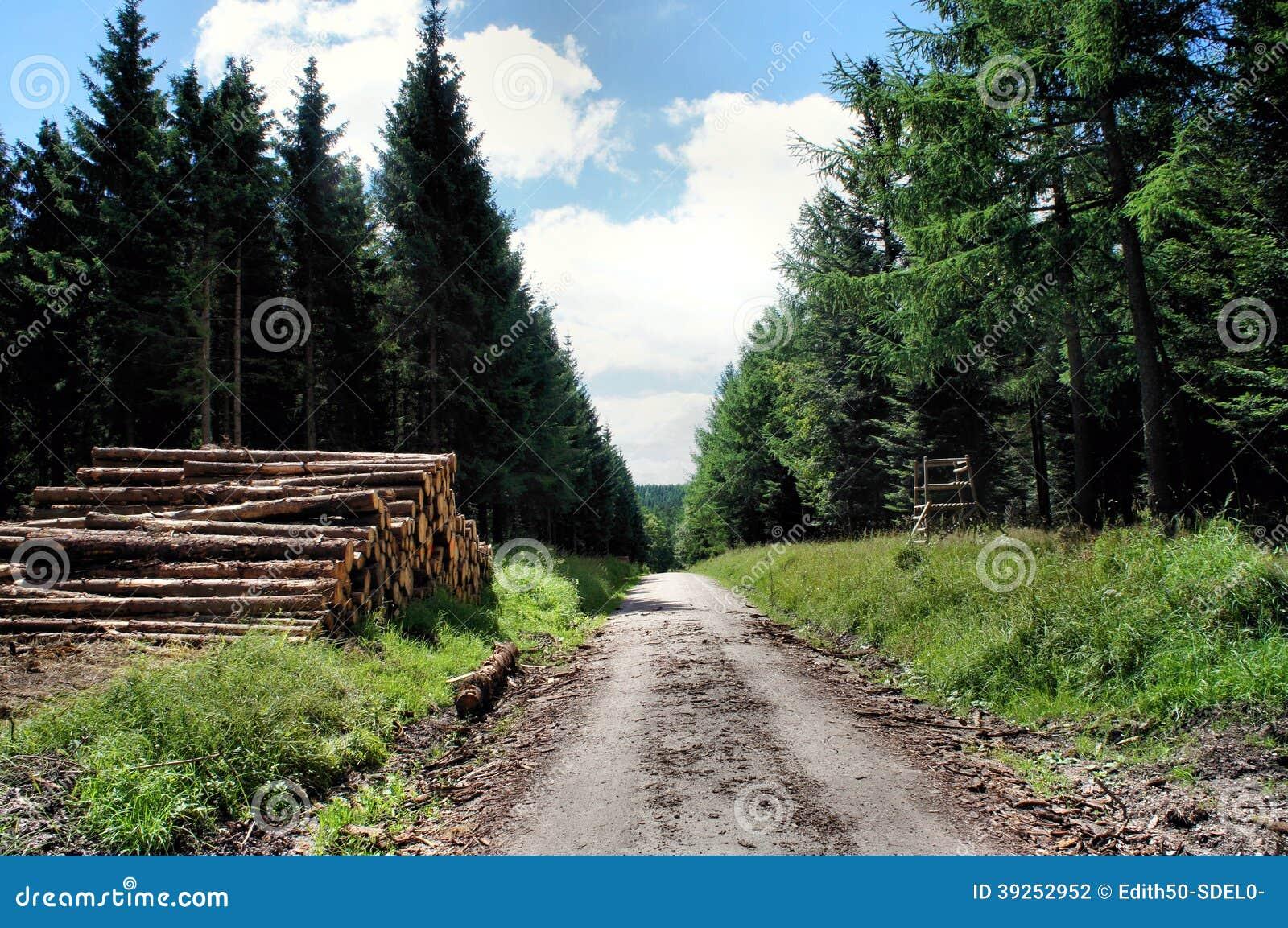 Лесохозяйство