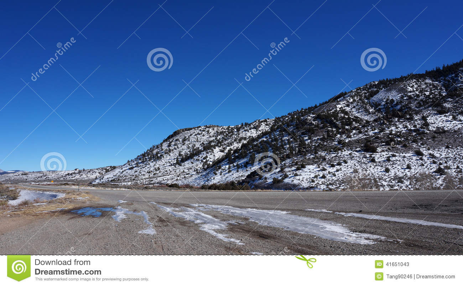 Лес Америки в зиме