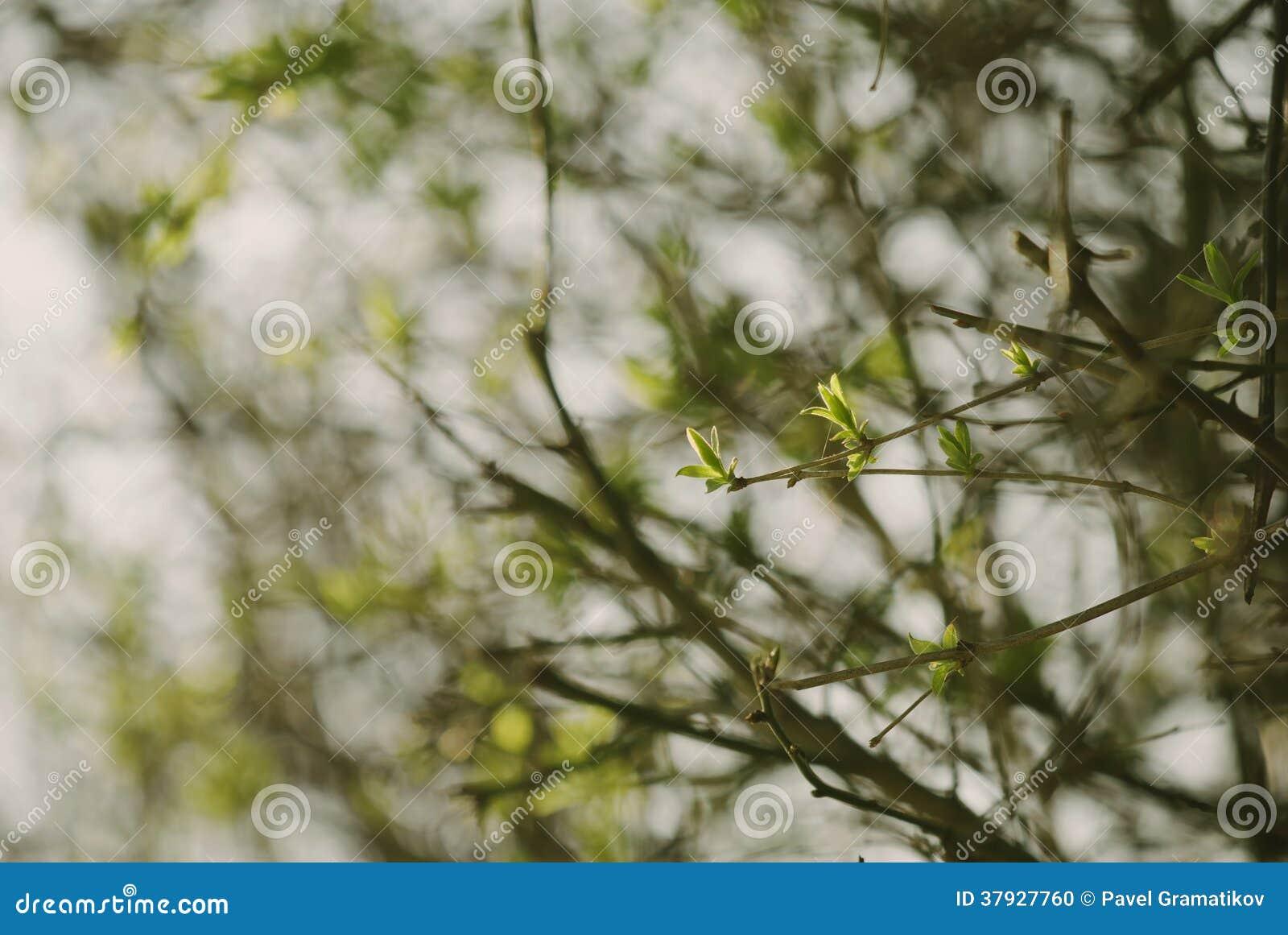 Лес весны зеленый