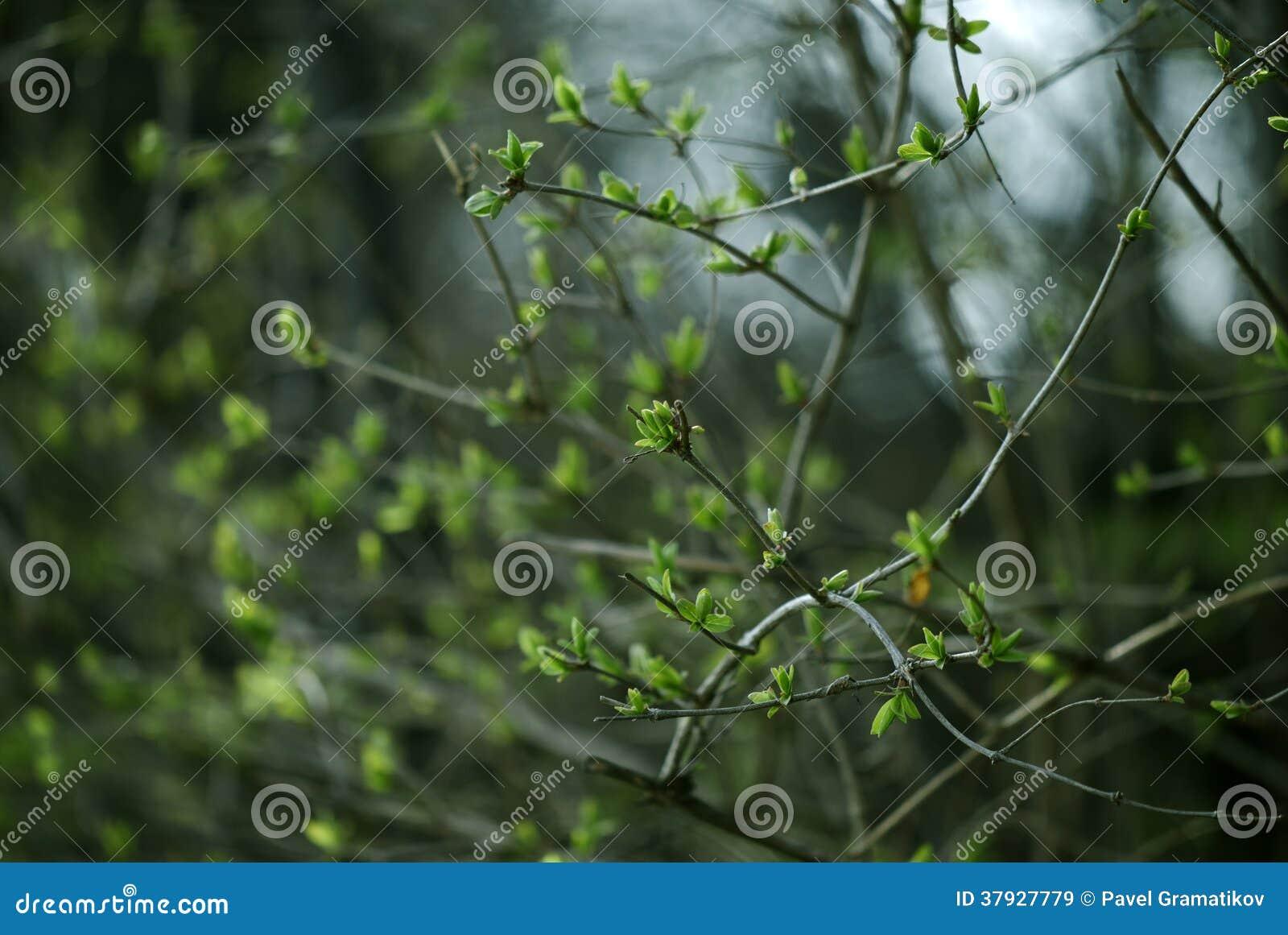Лес весны с сочной листвой