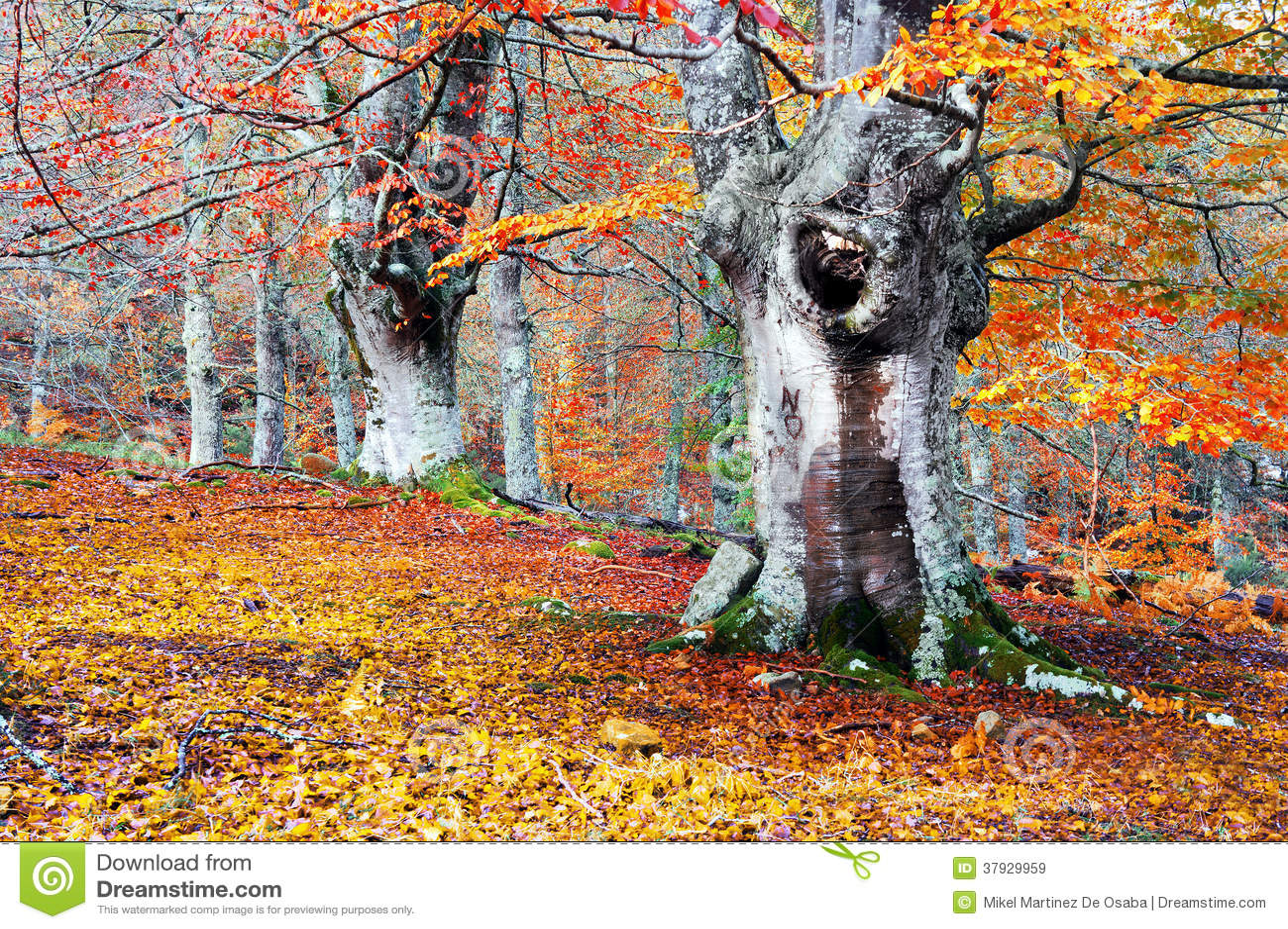 Лес в осени с яркими цветами