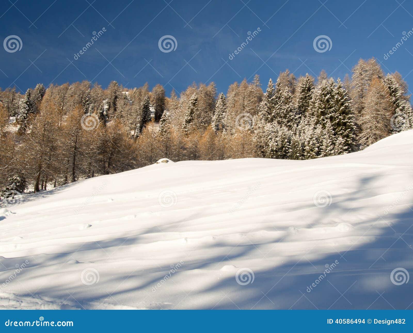 Лес горы в солнце