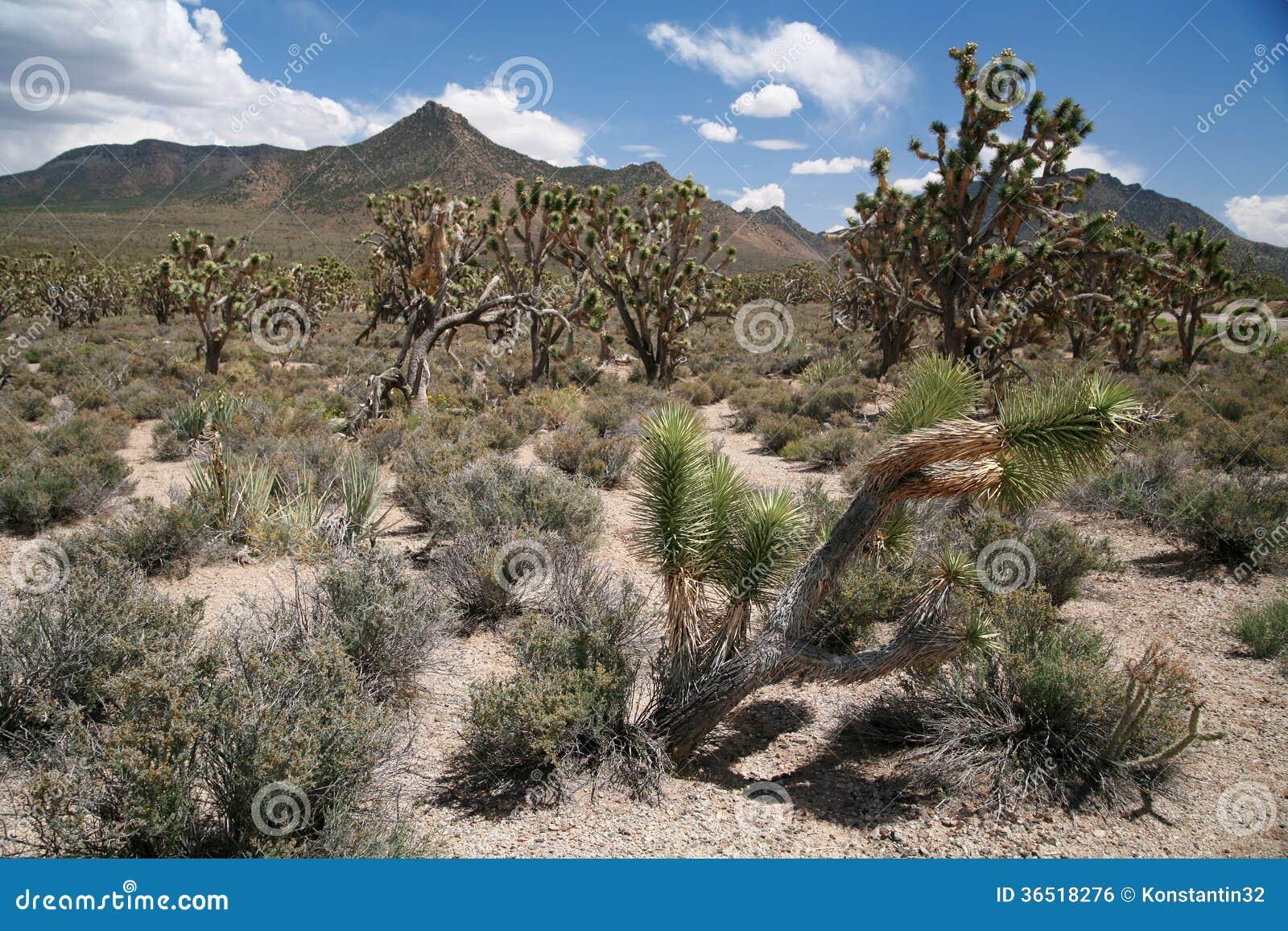 Лес дерева Иешуа, Аризона, США