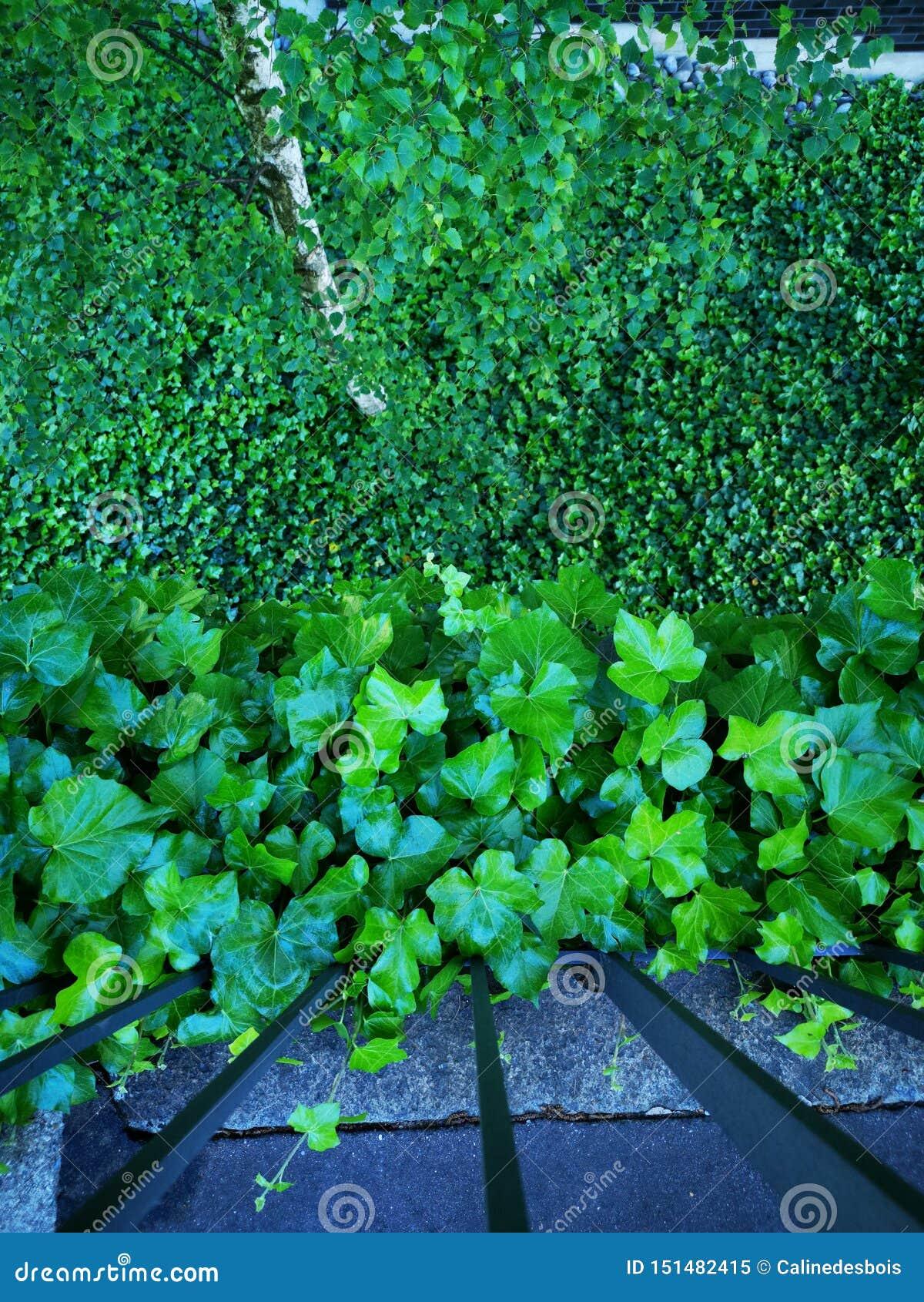 Лес зеленых листьев вверх и вниз