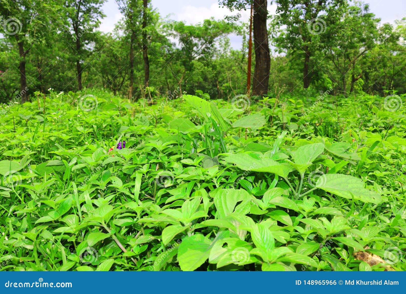 Лес и зеленое дерево джунглей Красивый естественный пейзаж Глубокие тропические джунгли r Предпосылка падения Солнечный свет леса