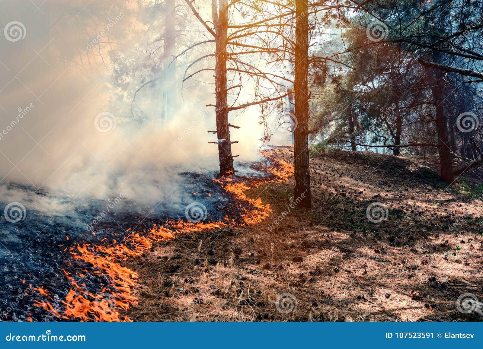 лес ожога огня