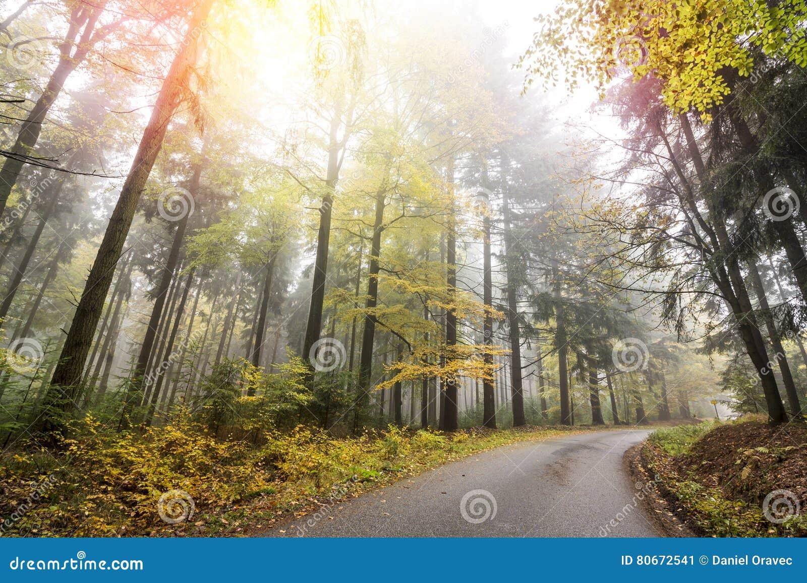 Лес осени с дорогой