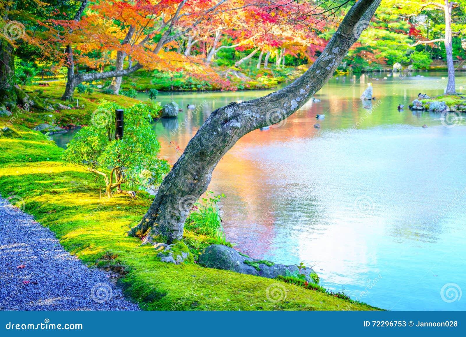 Download Лес осени с рекой стоковое изображение. изображение насчитывающей естественно - 72296753