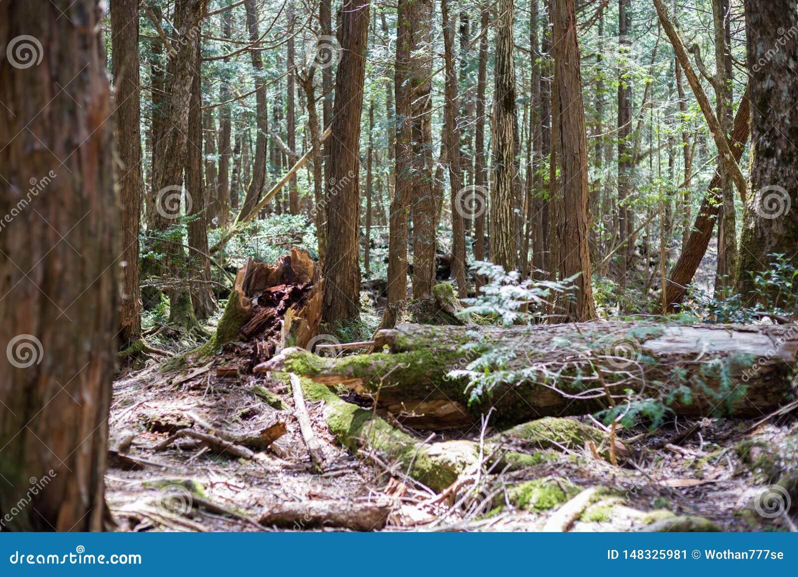 лес суицида