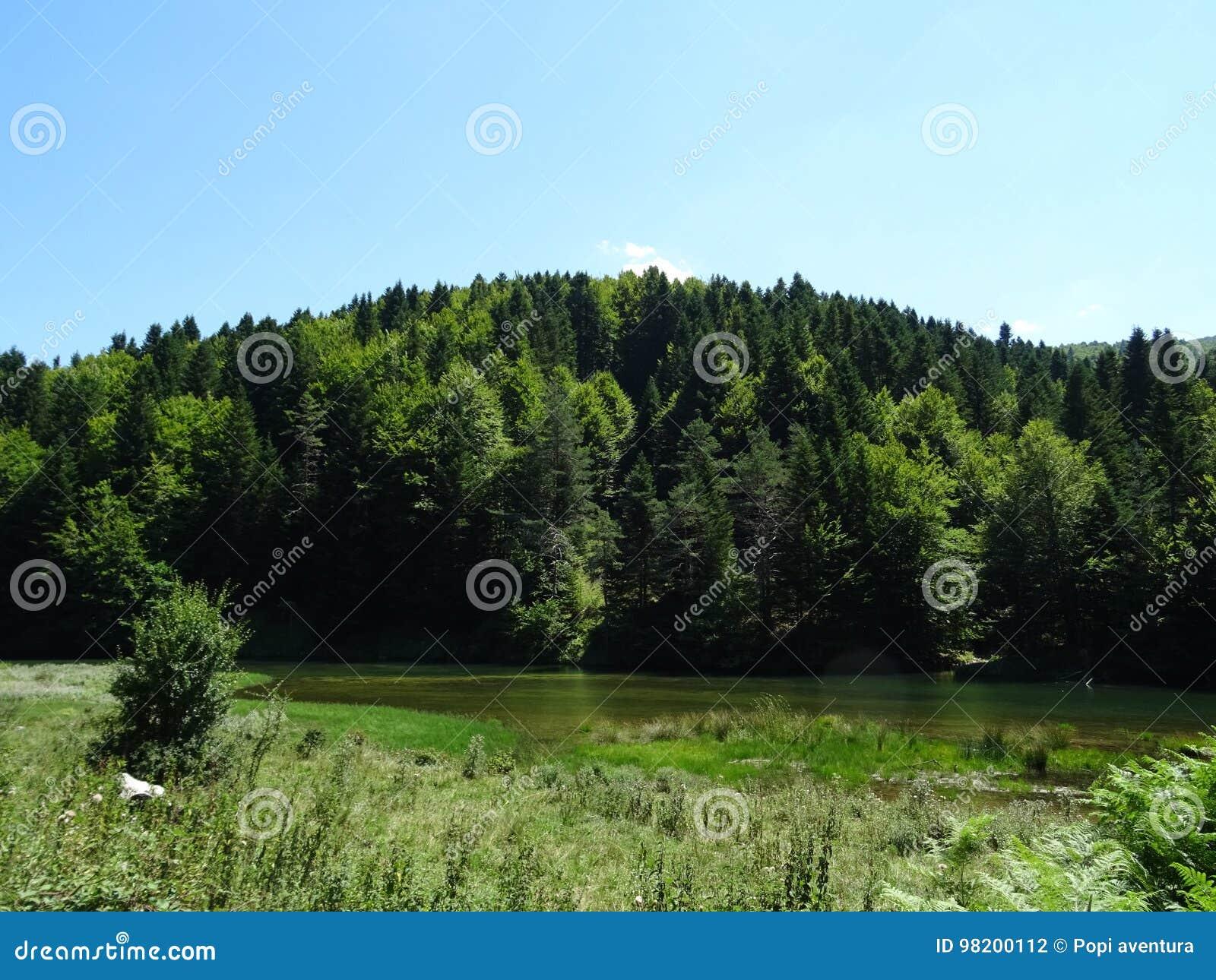 Download Лес irati стоковое фото. изображение насчитывающей испания - 98200112