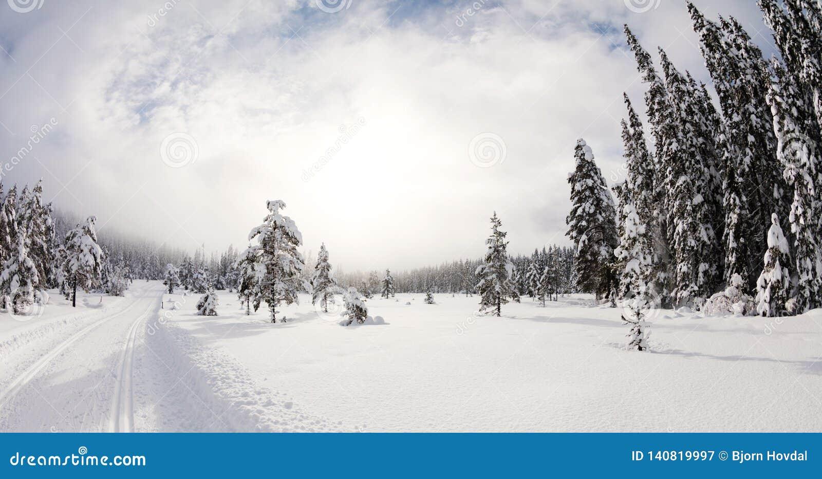 Лес Snowy увиденный от piste