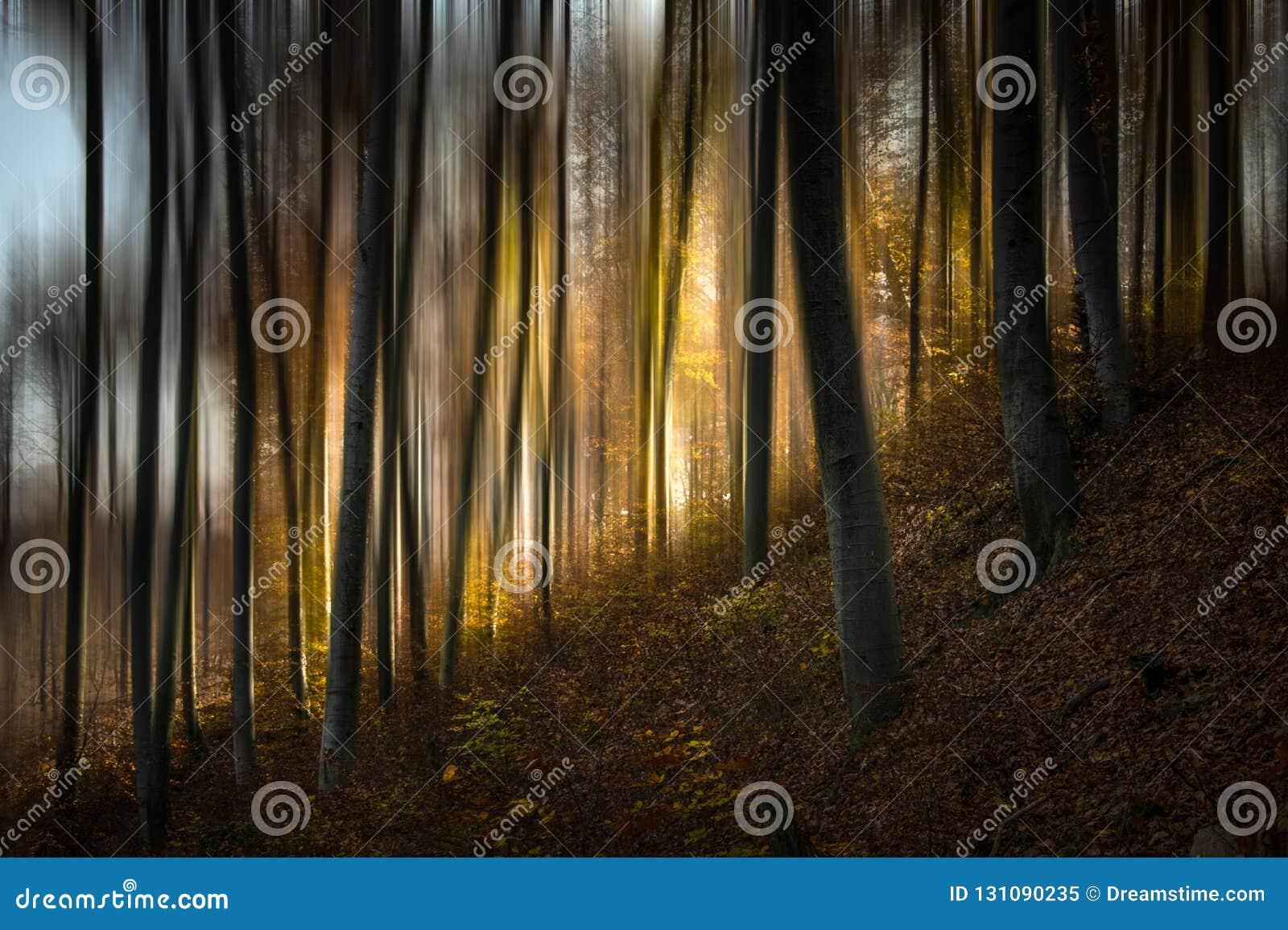 Лес v сказа