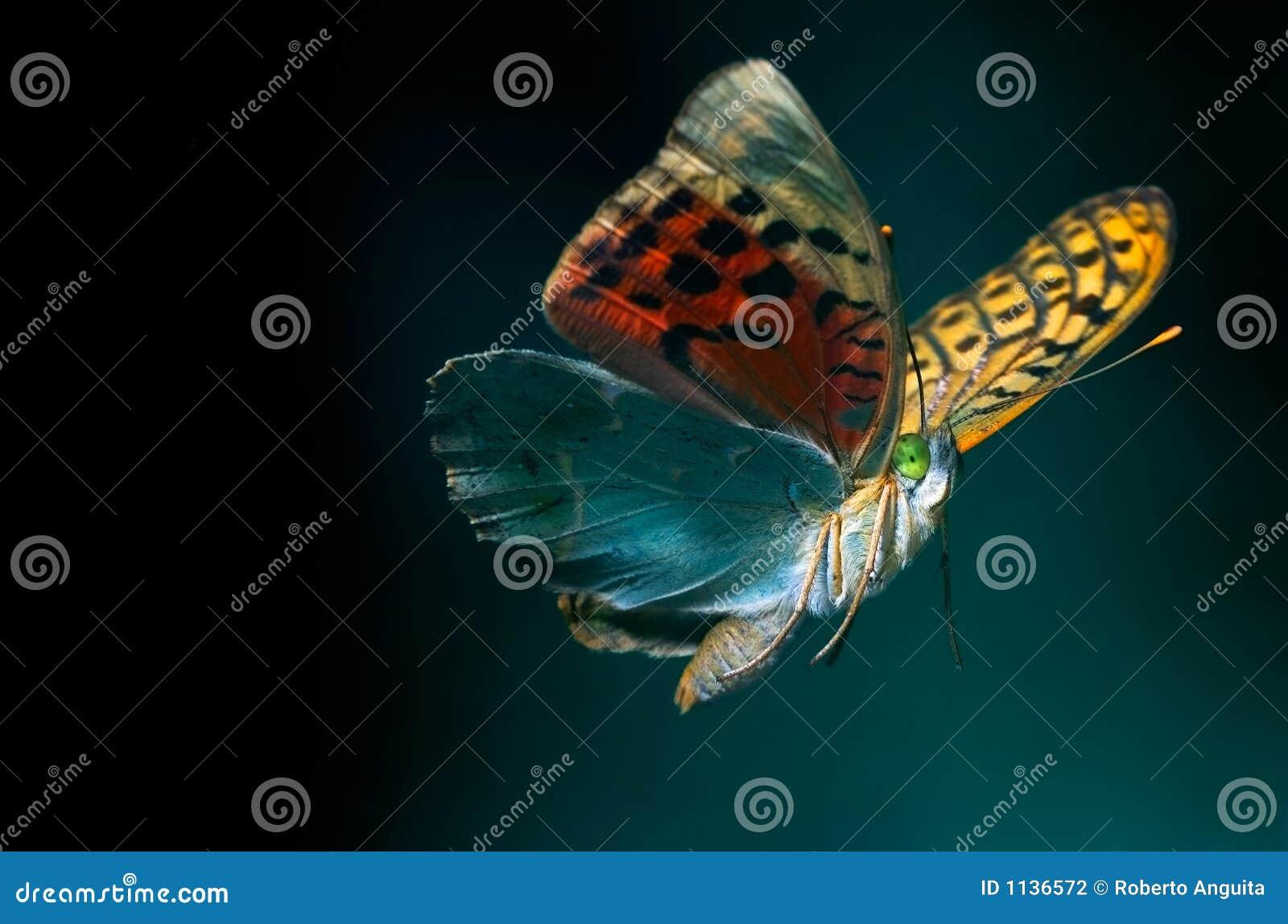 летание бабочки