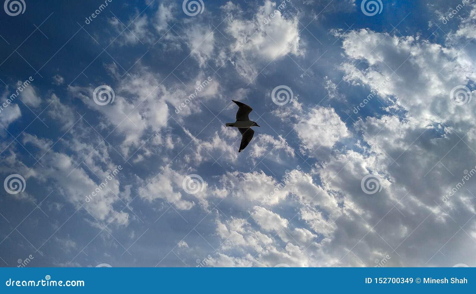 Летание птицы в высоченном