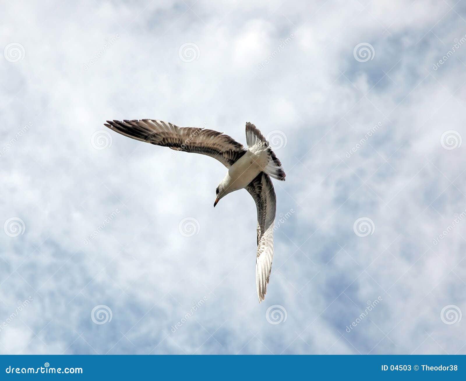 летание птицы